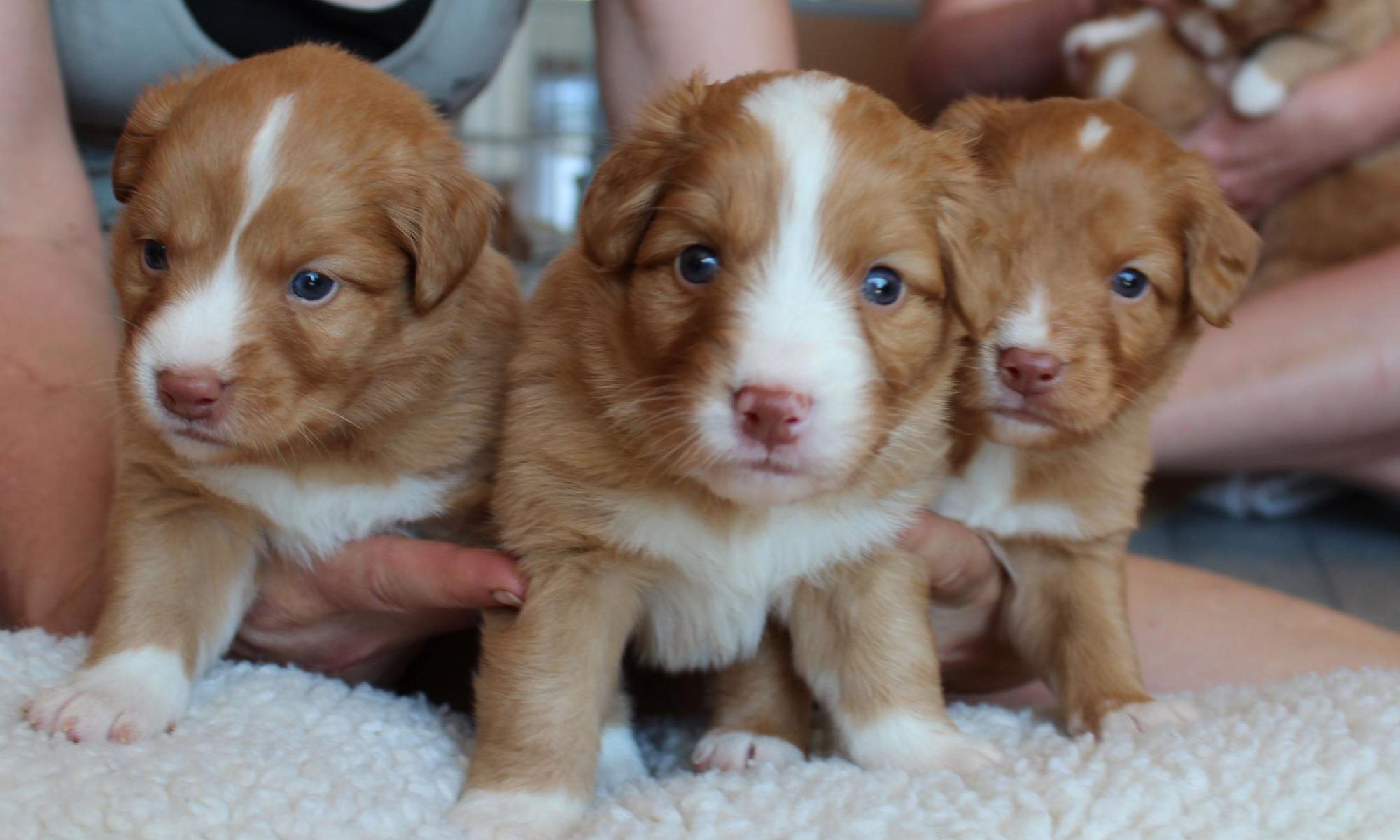 Quinn Creek Tollers
